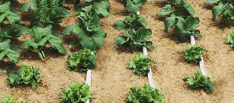 Применение карьерного песка для растений